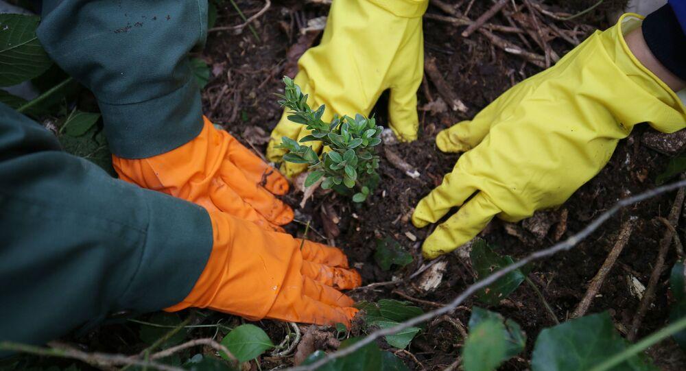 ベルギー 不要端末を樹木に変えるキャンペーン