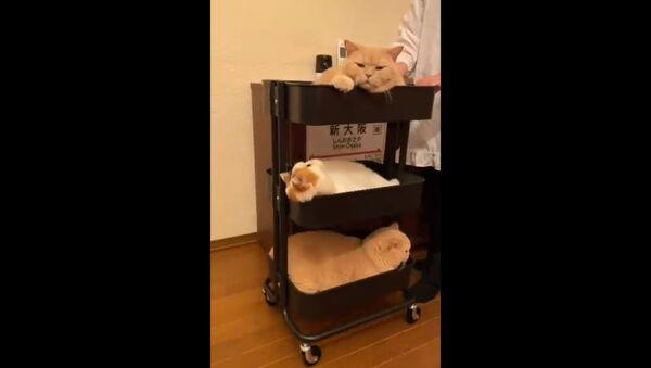 売り切れ続出? 新幹線の車内販売、3段重ねのネコ登場 - Sputnik 日本
