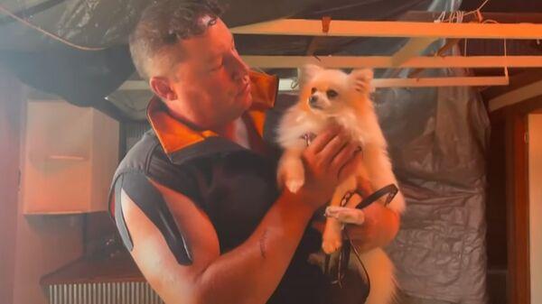 竜巻に飛ばされた犬が無事生還 退院して我が家へ - Sputnik 日本