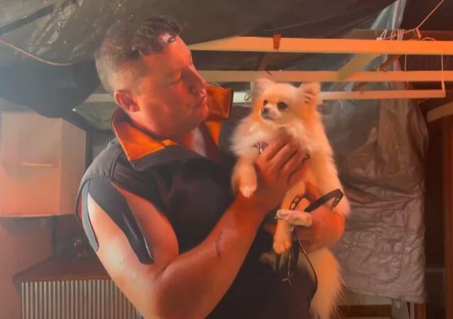 竜巻に飛ばされた犬が無事生還 退院して我が家へ