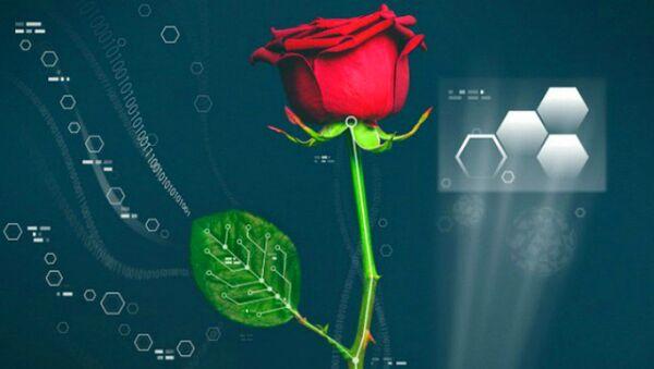 スウェーデンの植物学者ら バラの中で「導線を育てる」事に成功 - Sputnik 日本