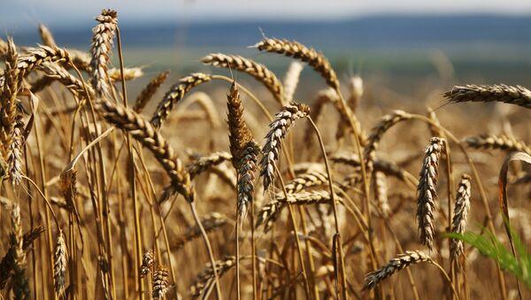 米農務省 今年ロシアが小麦輸出量で世界一になると予測 - Sputnik 日本