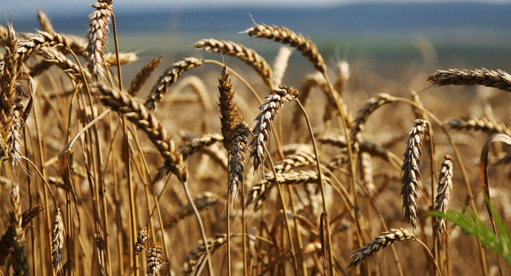 日本 極東の農業発展への参加に関する具体案を準備