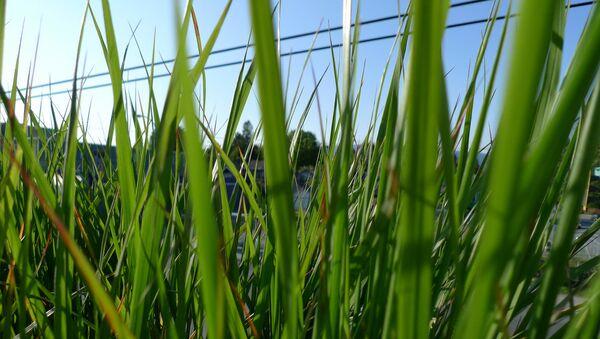 世界初 環境に優しい埋葬用の墓地が開設 - Sputnik 日本