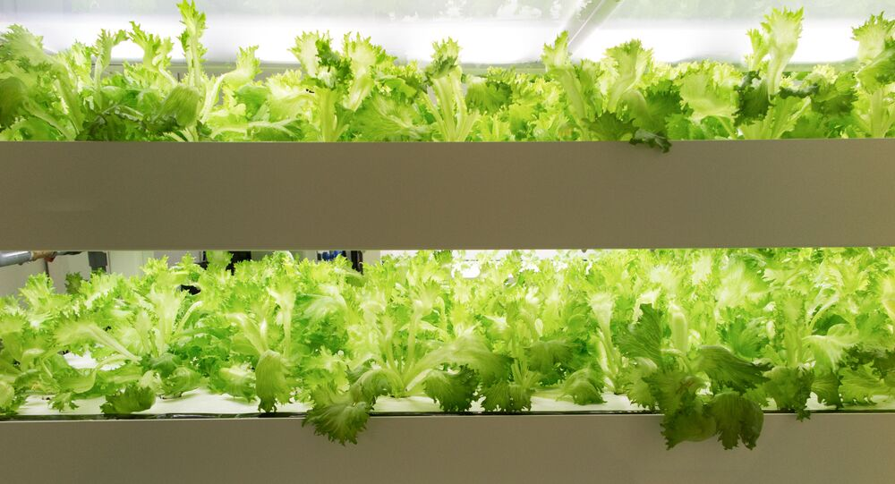 農業は楽しい3K,福島発の安全な作物栽培法を日本の教授が考案