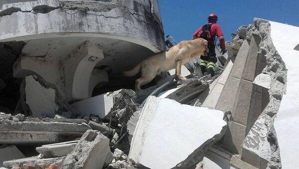 エクアドル地震 救助犬「ダイコ」ガレキの下から7人無事救出後 疲労のため死す - Sputnik 日本