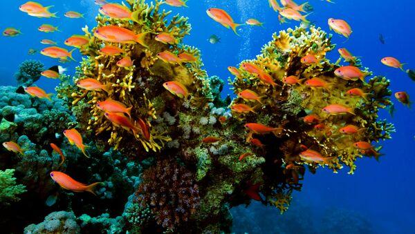 サンゴ礁 - Sputnik 日本