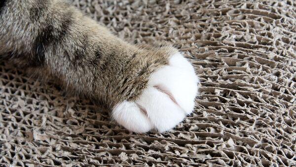 猫の手 - Sputnik 日本