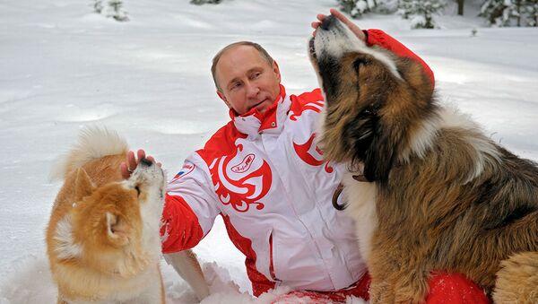 日本、プーチン大統領の秋田犬ユメの花婿を探す意向 - Sputnik 日本