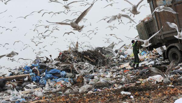 ゴミ捨ての仕方:ロシアと日本の違いはいかに? - Sputnik 日本