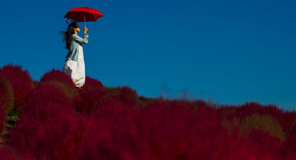 「一生に一度は行きたい国」日本、ロシア観光客数はまだまだ伸びる