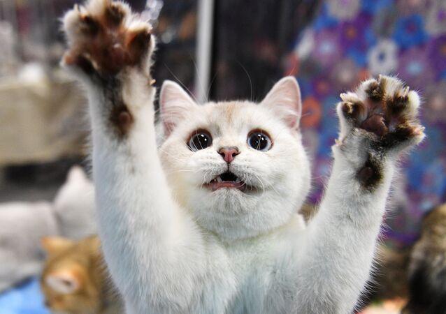 ブルガリアで障害を抱える野良猫にチタン製の義足がつけられる 【動画】