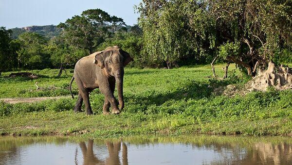 カンボジアで内戦時代の穴から象11頭が救出 - Sputnik 日本