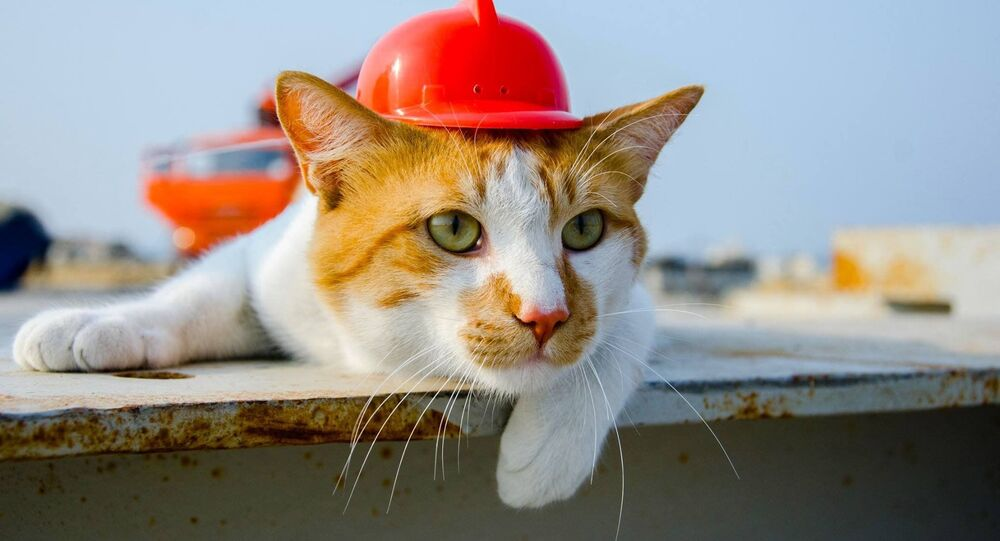 建設現場のネコ監督がクリミア橋建設を「監査」