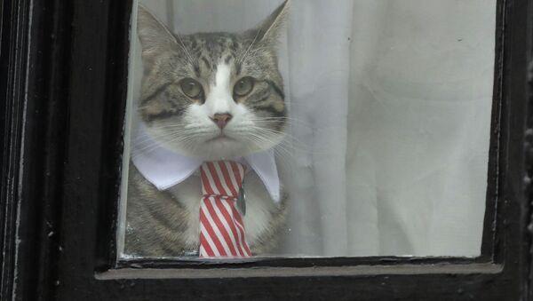 アサンジ氏の猫 - Sputnik 日本