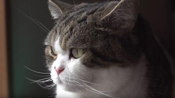 世界で最も有名な猫が、ギネス世界記録に認定される【動画】 - Sputnik 日本