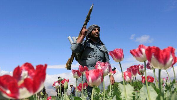 アフガニスタン 麻薬 - Sputnik 日本