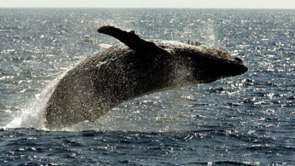 クジラ - Sputnik 日本