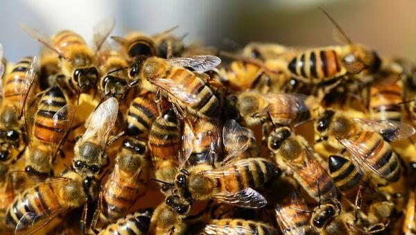 ミツバチ - Sputnik 日本