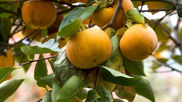 岐阜の甘い柿 2個で54万円 - Sputnik 日本