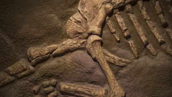 恐竜の化石(アーカイブ) - Sputnik 日本