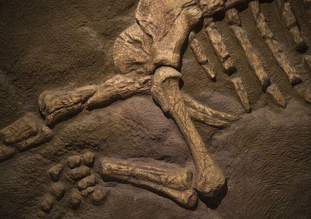 恐竜の化石(アーカイブ)
