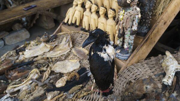香港警察、ブードゥー教の儀式のために動物を虐待した疑いで男を拘束 - Sputnik 日本