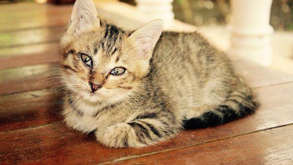 Кошка флиртует - Sputnik 日本