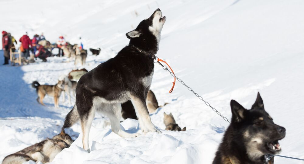 カムチャツカで世界最長の犬ぞりレースがスタート!