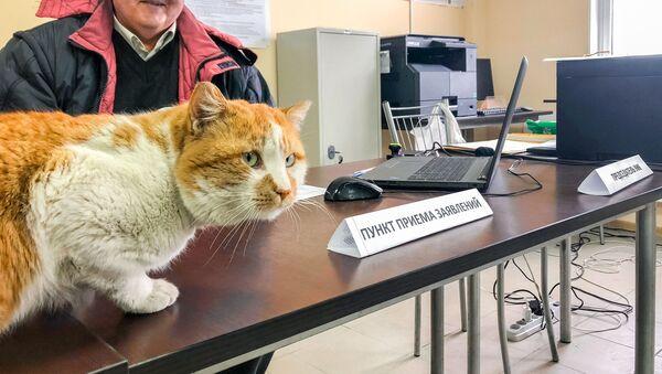猫のモスチク、クリミア橋建設作業員の「投票率を確保」【写真・動画】 - Sputnik 日本