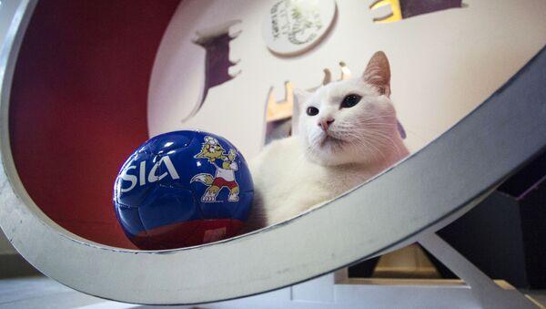サッカーW杯の預言者に白猫アキレスが選ばれる - Sputnik 日本