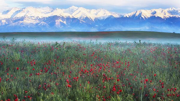 Цветущие маковые поля близ Алматы, Казахстан - Sputnik 日本