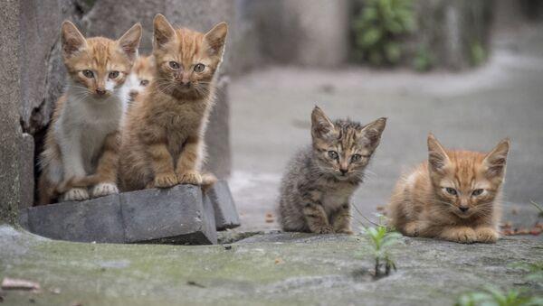 Пять котят сидят в переулке жилого комплекса в Шанхае, Китай - Sputnik 日本