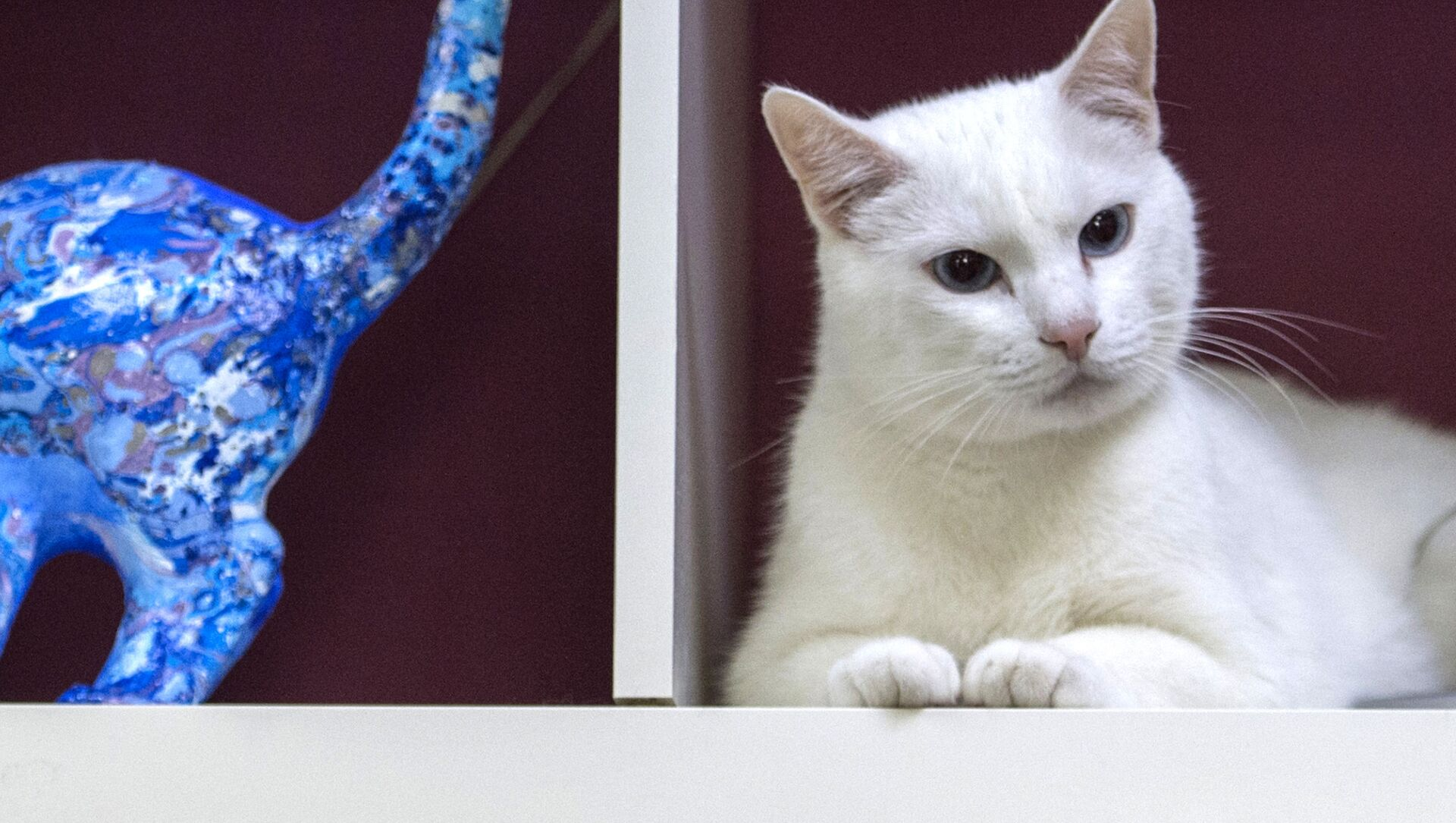 エルミタージュの猫 - Sputnik 日本, 1920, 26.02.2021