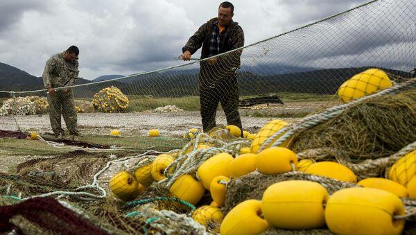 国際水産フォーラム 世界の食卓に魚を並べ、海の生物資源を枯渇させないために - Sputnik 日本