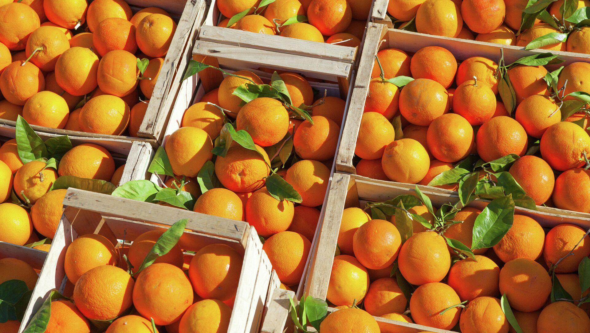 オレンジ - Sputnik 日本, 1920, 06.04.2021