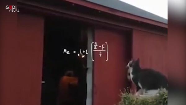 「跳ぶべきか、跳ばざるべきか?」 ジレンマ猫ビデオがウイルスに - Sputnik 日本