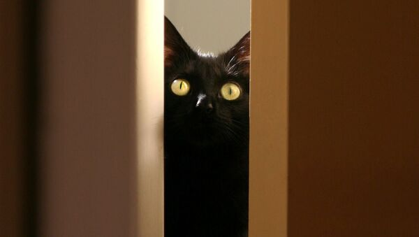 黒猫 - Sputnik 日本