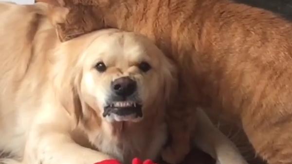 すべてが顔に表れている:この犬は優しさを望んではない - Sputnik 日本