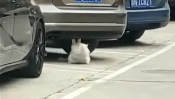 鋼鉄の腹筋をもつ猫 目標に飽くなき邁進 - Sputnik 日本