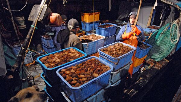 Добыча морского ежа - Sputnik 日本