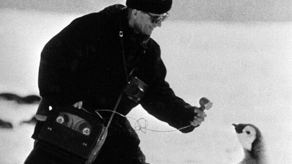 モスクワ特派員がペンギンにインタビュー - Sputnik 日本