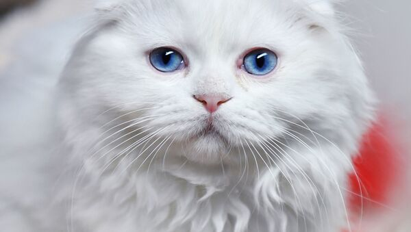 ペットの世話で長寿促進=伊研究 - Sputnik 日本