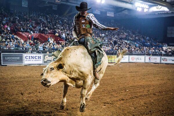 米テキサス州で、雄牛の乗り手たちによる競技会に参加する男性 - Sputnik 日本