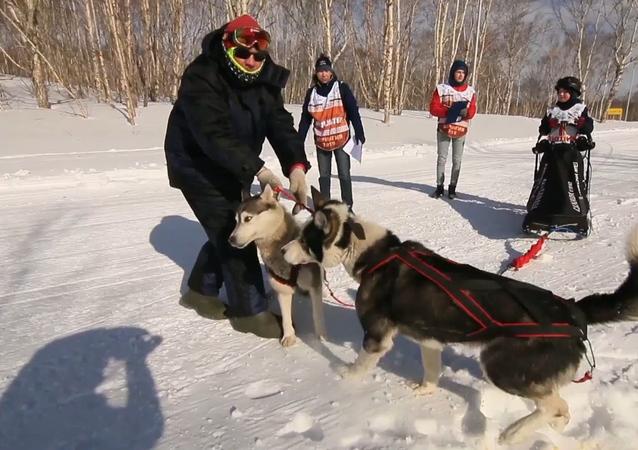 「雪犬」カムチャツカ半島で子ども犬ぞりレースが開催