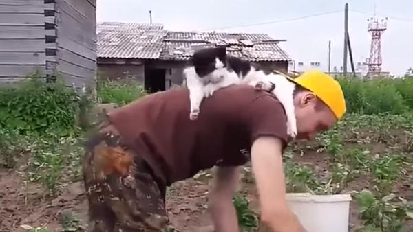 飼い主の「手伝い」 働く男性の背中で猫が休憩 - Sputnik 日本