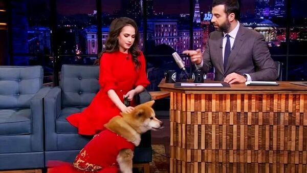 五輪、世界選手権の金メダリストのロシアのアリーナ・ザギトワ選手は愛犬のマサルを連れてロシアの人気TVショーに出演した - Sputnik 日本