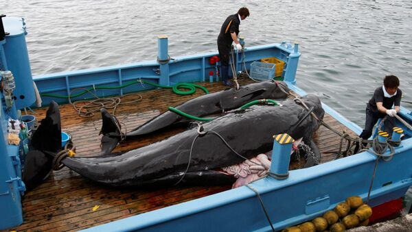 商業捕鯨 - Sputnik 日本