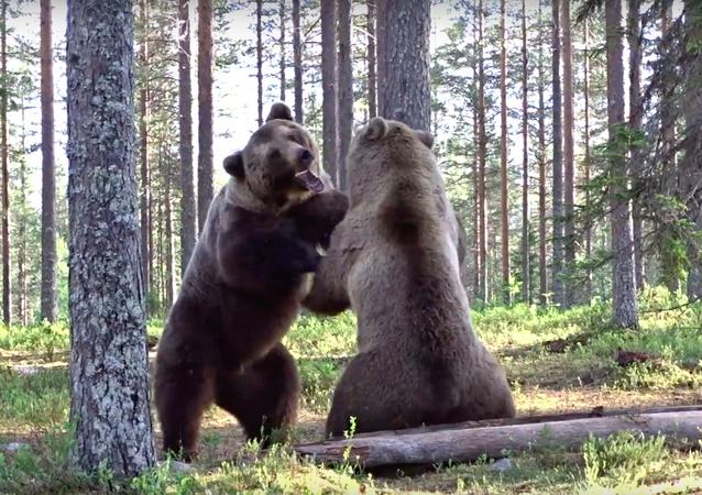 クマ同士の熾烈な喧嘩を映した貴重な映像が公開
