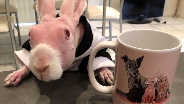 毛のないウサギがSNSの人気者に - Sputnik 日本